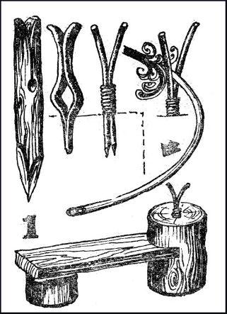 Когда и как заготавливать лозу